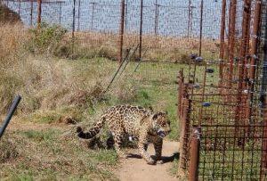 and Beyond Jaguar Tompkins Foundation Tompkins Stiftung Les Carlisle