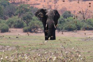 Elefanten Safari Afrika Sri Lanka segara andBeyond Uga Escapes