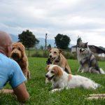 Rene Meier Hundeschule PRIVA Alpine Lodge PR segara München