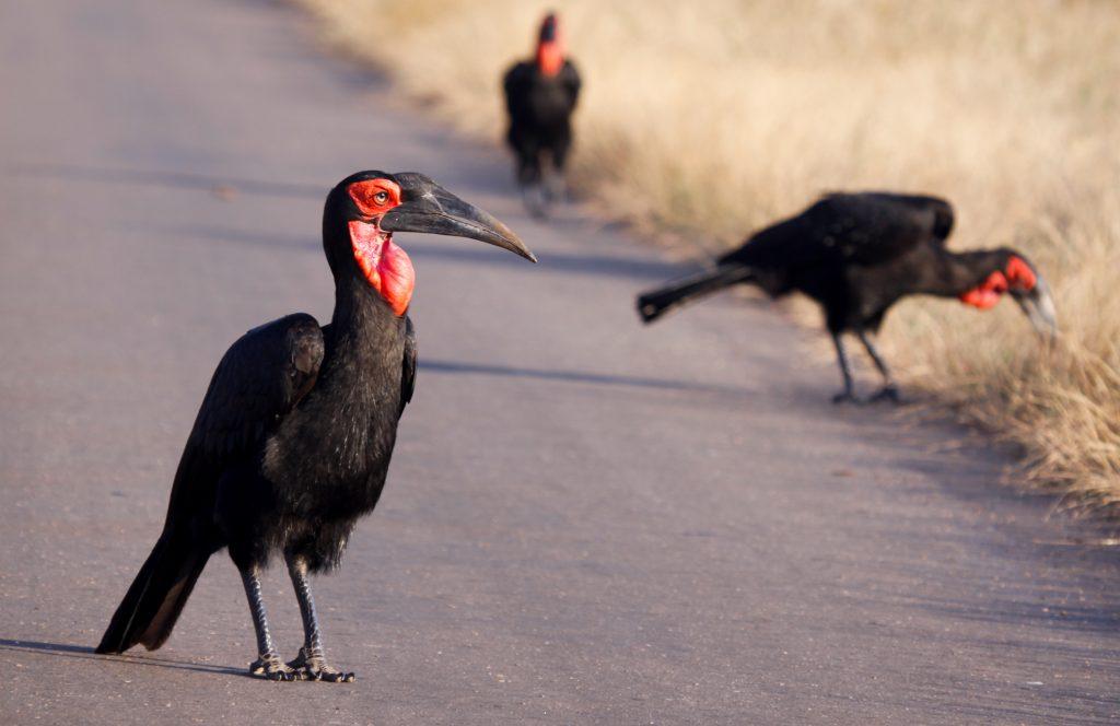 southern hornbill andBeyond südafrika botswana ornithologe segara PR agentur tourismus münchen