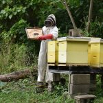 Er ist das flüssige Gold am Frühstückstisch: gesunder Bienenhonig. Auf Laucala Island fließt dieser dank eigener Zucht direkt von der Wabe auf den Teller