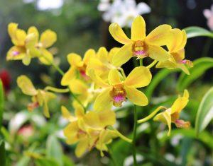 Laucala Island segara PR Agentur München Orchideen