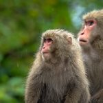 segara_pr_muenchen_art_of_travel_Sankara_monkeys_2