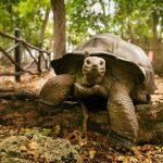 segara_PR_Agentur_München_Raffles_Seychelles_Tortoise
