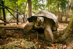 segara Kommunikation PR Agentur München Raffles Seychelles Schildkröten