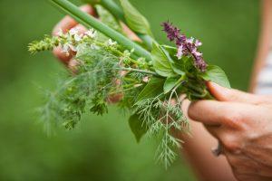 segara_PR_Agentur_München_Laucala_Island_herbal_garden_plants