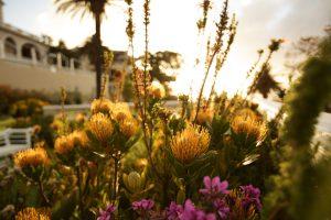 segara_PR_Agentur_München_Ellerman_House_Garden_sunset