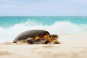 Fregate Private Island segara PR Agentur München Turtle Schildkröte