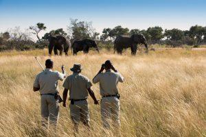 segara_PR_Agentur_München_andBeyond_Xaranna_Okavango_Delta_Camp_Bush_Walks