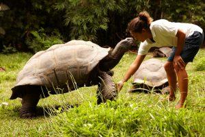 segara_PR_Agentur_München_Fregate_Island_Private_Conservation_tortoise_human feeding
