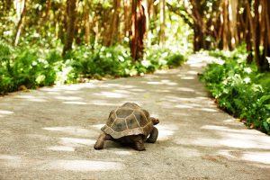 segara_PR_Agentur_München_Fregate_Island_Private_Conservation_tortoise