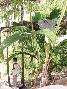 Raffles_Seychelles_segara_Kommunikation_PR_Agentur_Muenchen_Tourismus_Path_to_the_Beach