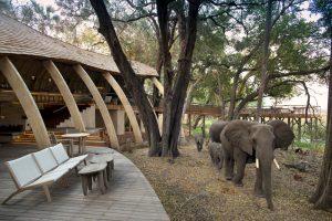 segara_PR_Agentur_München_Elephant_in_guest_area_andBeyond_Sandibe