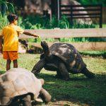 Raffles_Seychelles_segara_PR_Agentur_München_Toursimus_Kids_Boys_Tortiose (3)