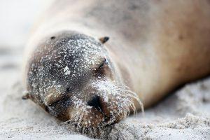 segara_PR_agentur_München_Silversea_Cruises_Neue_Pioneering_Fund_Galapagos