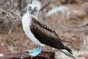 segara_PR_agentur_München_Neue_Pioneering_Fund_Galapagos_3