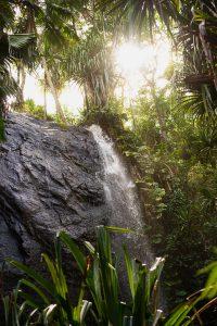 segara_PR_agentur_München_Tourismus_Raffles_Seychelles_Lifestyle_Excursions_Plant_Water