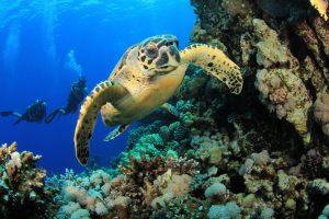 segara_PR_Agentur_München_andBeyond_Phinda_Sodwana_Bay_Ocean_Safari_Diving_Turtle
