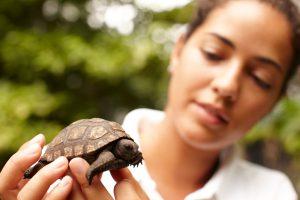 segara_PR_Agentur_München_Fregate_Island_Private_Conservation_Tortoise_Sanctuary
