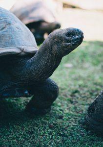 segara_PR_Agentur_München_Raffles_Seychelles_Lifestyle_Tortoise