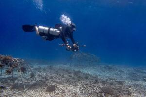 segara_PR_Agentur_München_Tourismus_Fregate_Island_Private_underwater