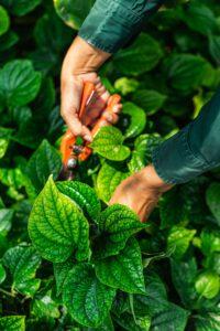 segara_PR_Agentur_München_Tourismus_Chiva-Som_Organic_Garden