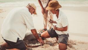 segara_PR_Agentur_München_Fregate_Island_Private_Conservation_Turte Tagging