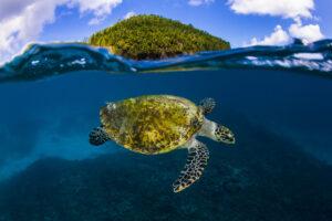 segara_PR_Agentur_München_Tourismus_Fregate_Island_Private_Marine Life_Nature_©Joe_Daniels