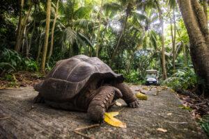 segara_PR_Agentur_München_Fregate_Island_Private_Jungle_Tortoise