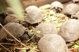 segara_PR_Agentur_München_Fregate_Island_Private_Conservation_Tortoise_Sanctuary_Turtles