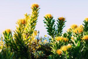 segara_PR_Agentur_München_Ellerman_House_garden_fynbos_landscape