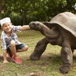 segara_PR_Agentur_München_Tourismus_Fregate_Island_Private_Family_Adventure_Pirate_Tortoise