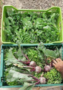segara_PR_Agentur_München_Martinhal_Sagres_Garden_salad