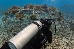 Fregate_Island_Private_segara_PR_Agentur_Munich_marine_diver_corals_Copyrights_Blancpain_Daniel_Bichsel