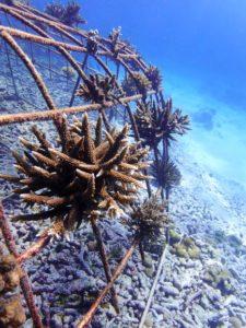 Fregate_Island_Private_segara_PR_Agentur_Munich_Corals_Result_4_month_5_months_Copyrights_Coralive.org