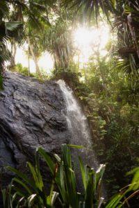 Raffles_Seychelles_segara_PR_Agentur_München_Excursions_Plant_Water