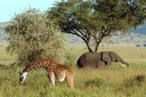 segara_PR_Agentur_München_Wildlife_Africa