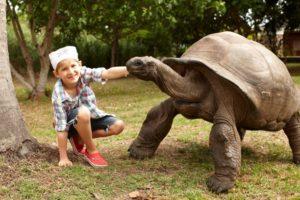 Fregate_Island_segara_PR_Agentur_München_family_adventure_tortoise