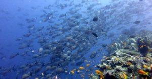 andBeyond_Quirimbas_Archipel_Mosambik_Korallenriff_segara Kommunikation Tourismus PR Agentur München