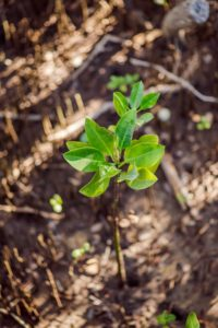 segara_PR_Agentur_München_Chiva-Som_Mangrove_Ecosystem