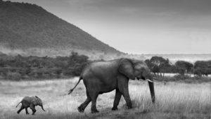 AndBeyond Afrika Elefanten segara Kommunikation Tourismus PR Agentur München