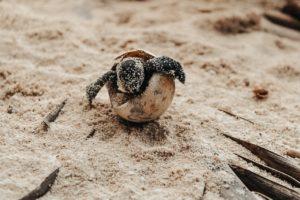 Fregate Island Seychellen Strand Schildkröten segara Kommunikation Tourismus PR Agentur München