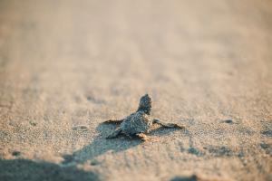 banwa-private-island-schildkröte-HiRes