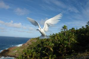 Fregate Island Private Conservation Bird