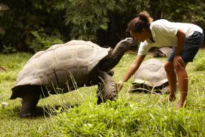 Fregate Island Private Tortoise Human Feeding