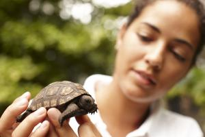Fregate_Island_Private_Conservation_tortoise_sanctuary