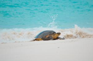 Fregate_Island_Private_Conservation_turtle