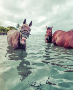 Laucala_Island_Horses_Sea_Bathing©Trey_Ratcliff