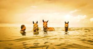 Laucala_Island_Horses©Trey_Ratcliff