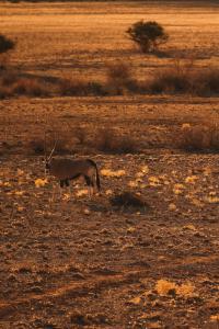 Sonop_Outdoor_Wildlife_Antilope_©_Zannier_Hotels